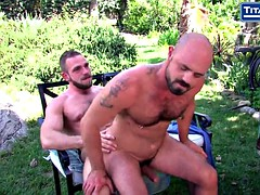 hairy bears bald muscle sucks cock outside