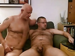 Hairy bear playing with daddy