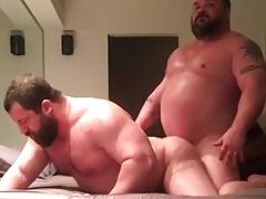 muscle bears 2