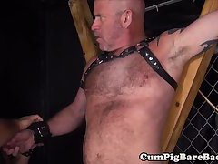 Ripped bear barebacks suspended wolf in hoist
