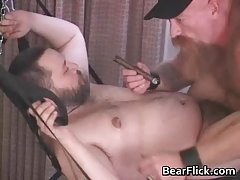 Chicago cigar bears bdsm fucking