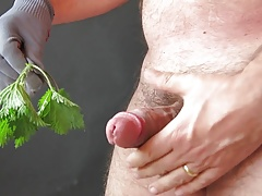Stinging netlles on cock