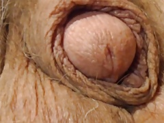 Old cock closeup